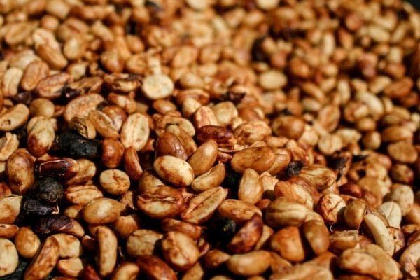 قهوه اسپشیالیتی هانی چالا